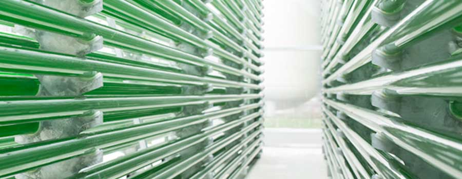 Tube Photobioreactor, SCHOTT