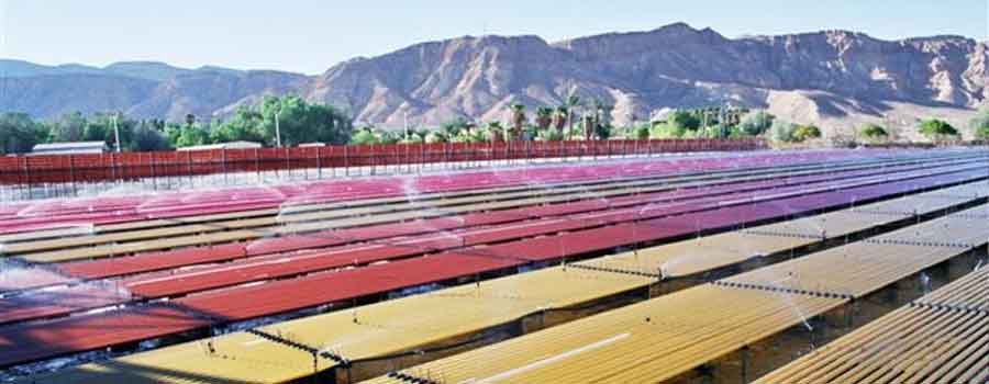 Algatech Algae Farm for Astaxanthin